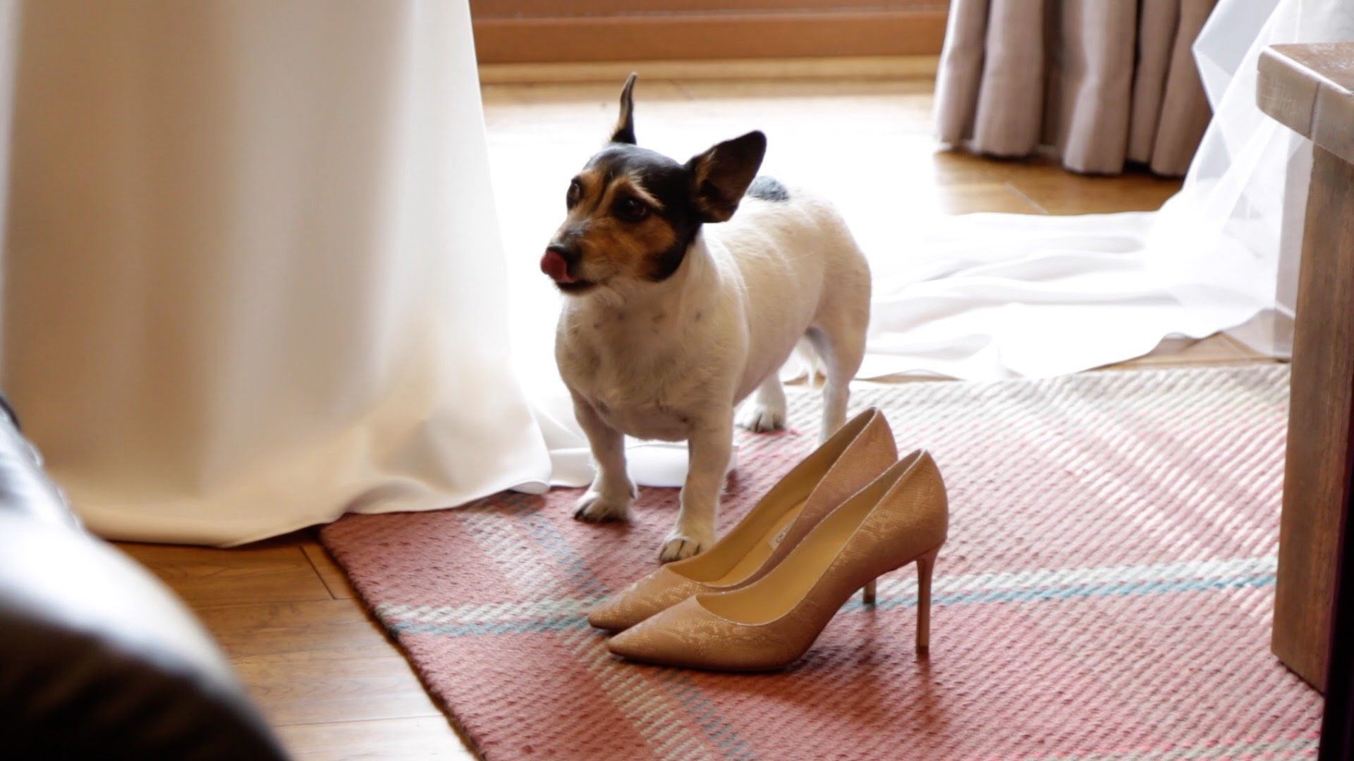Wedding shoe and dog